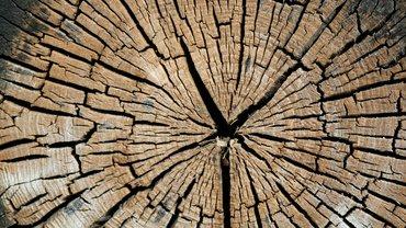 Blick auf die Schnittfläche eines abgesägten Baums.